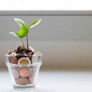 Money Tree website image